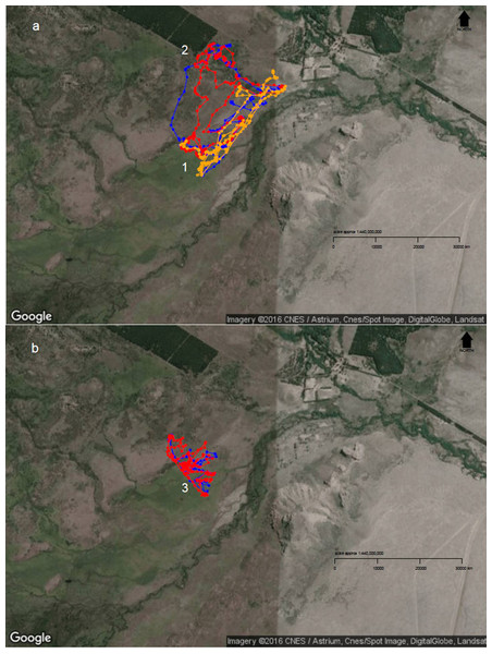Diurnal movement patterns of sheep under 3-category and 2-category mixed flocks at Repunte-Bajo paddock.