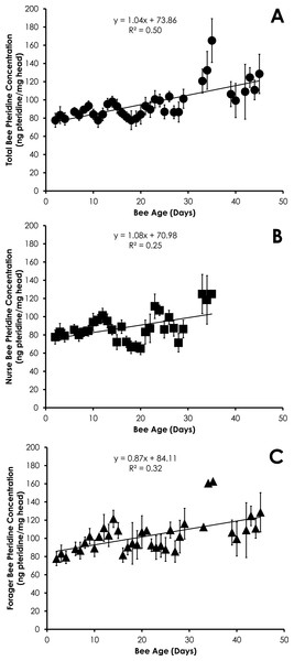 Linear relationship between bee age and pteridine concentration for all bees (A), nurse bees (B), and forager bees (C) from Single Cohort Colonies.