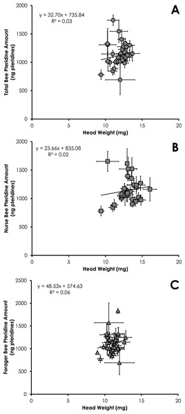 Linear relationship between head weight and pteridine amount for all bees (A), nurse bees (B), and forager bees (C) from Single Cohort Colonies.