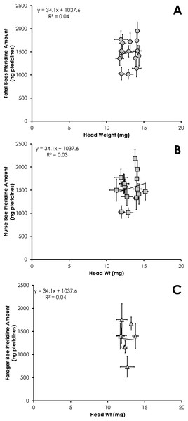 Linear relationship between head weight and pteridine amount for all bees (A), nurse bees (B), and forager bees (C) from colonies with normal demography.