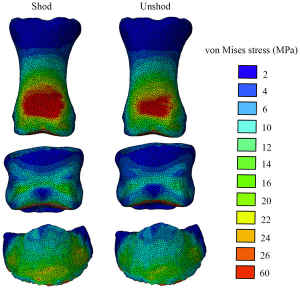Von Mises stress (MPa) distribution results for the shod and the unshod horse foot, in dorsal view.