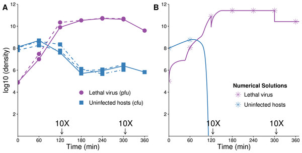 Growth dynamics of lethal virus (Qβ) on an initially high density of susceptible hosts.