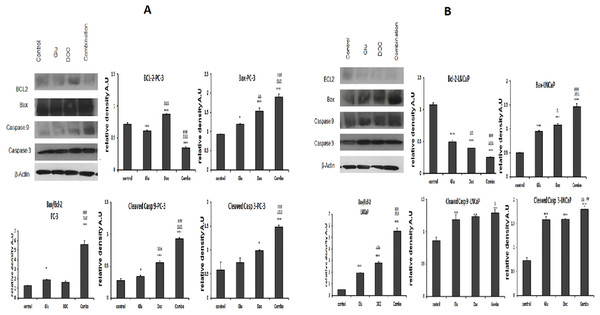 (A) The effect of GLU, DOC and their combination on the expression of mitochondrial apoptosis signaling proteins in PC-3 prostate cancer cells.