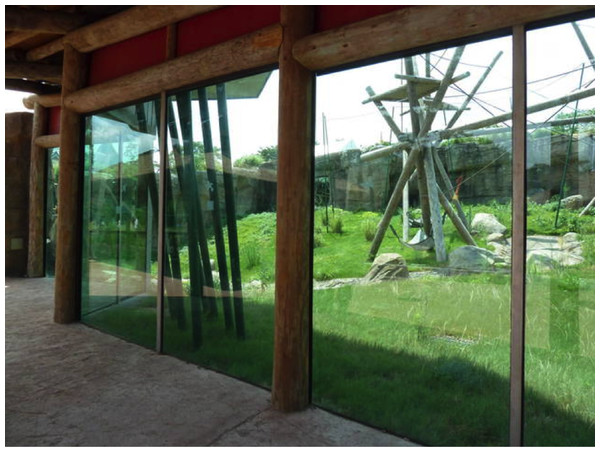 Typical view of exhibits associated with high window-strike fatalities, showing habitat beyond large, transparent glass panes.