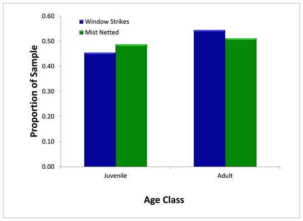 Comparison of availability, as measured by mist net sampling (N = 295), to window strike mortality (N = 11), by age, 2013–2014.