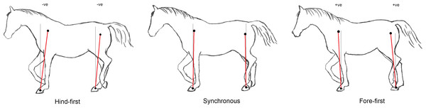 Illustration of mean limb postures for different dissociations during trotting.