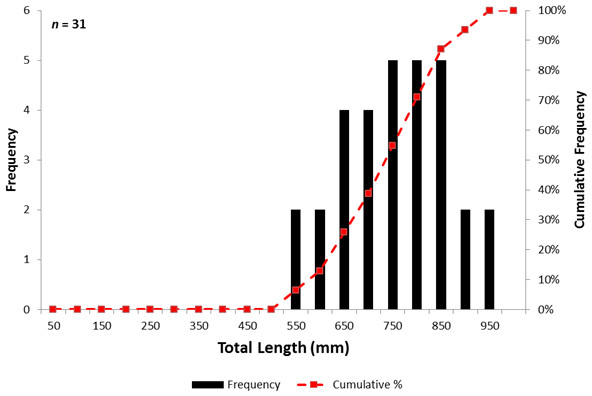 Length and cumulative frequency distribution of Atlantic sturgeon encountered in Albemarle Sound, North Carolina from April to October, 2014.