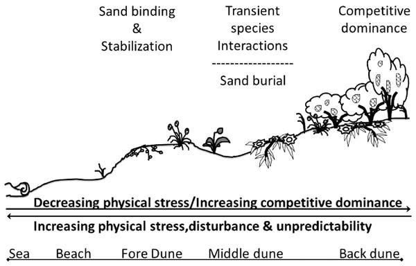 Conceptual model of Badesi dunes.