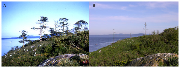 Comparison of photographs of central woodland on Mandarte Island (1963–2002).