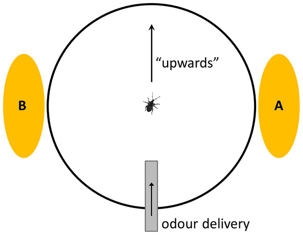 Schematic of top view of Servosphere setup, showing two alternative positions for visual stimulus (A = 90°; B = 270°) and direction of odour delivery.