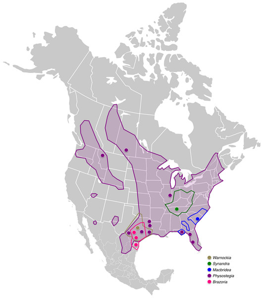 Distribution map of Synandreae in North America.