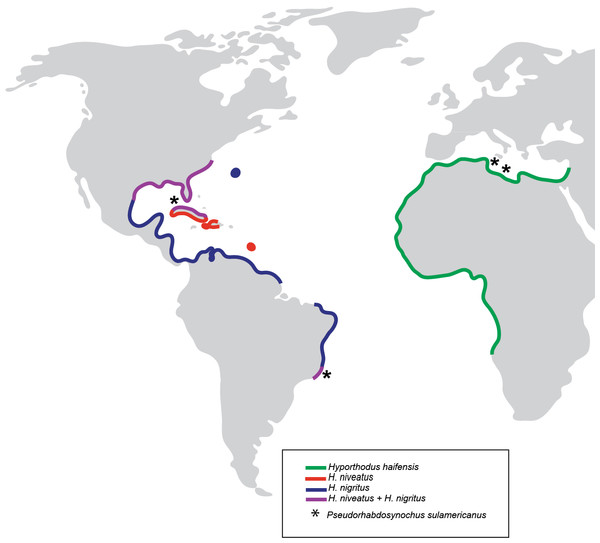 Geographical distribution of three species of Hyporthodus in the Atlantic Ocean and Mediterranean Sea, and localities where specimens of Pseudorhabdosynochus sulamericanus were collected.