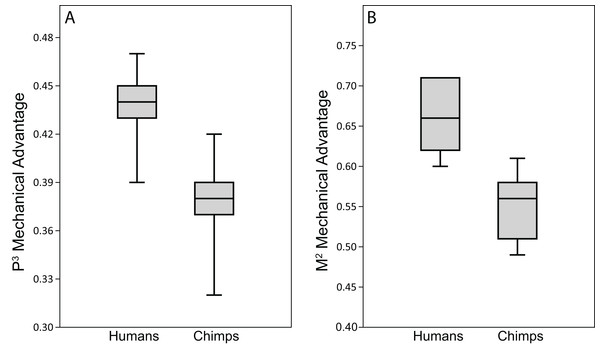 Biting efficiency: humans vs. chimpanzees.