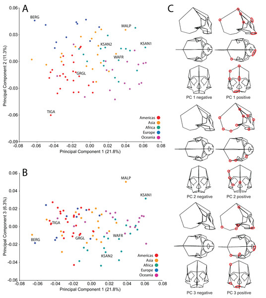 Principal components analysis (PCA) of human craniofacial shape variation.