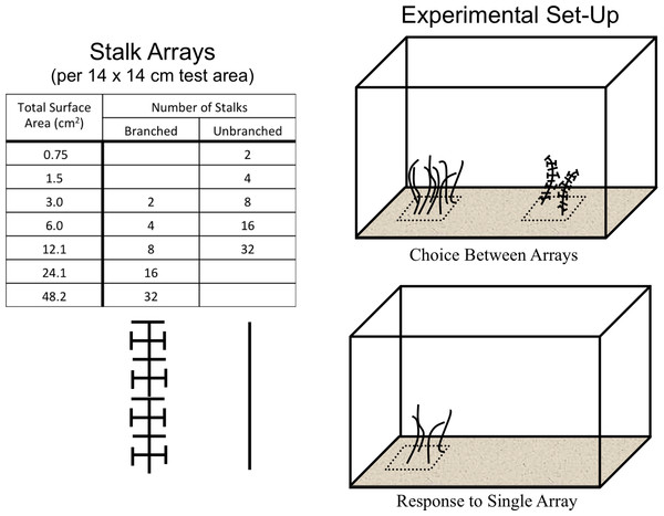 The experimental design.
