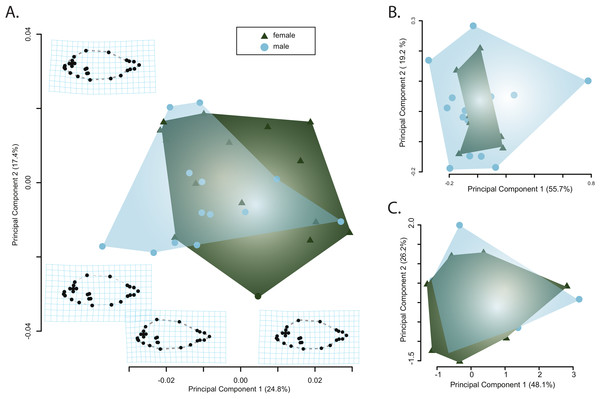 Visualizations of the first two principle component axes for changes in (A) body shape quantified by the geometric morphometric analyses; (B) jaw morphology; and (C) hematological data. Outlines correspond to the convex hull of the morphospace for females or males.