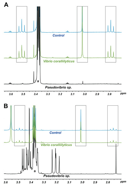1H NMR spectra showing DMSP utilization as (A) the sole carbon source and (B) the sole sulfur source in minimal media at the end of a six-day incubation.