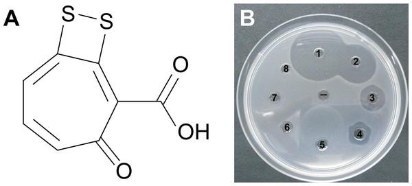 (A) Tropodithietic acid (TDA).