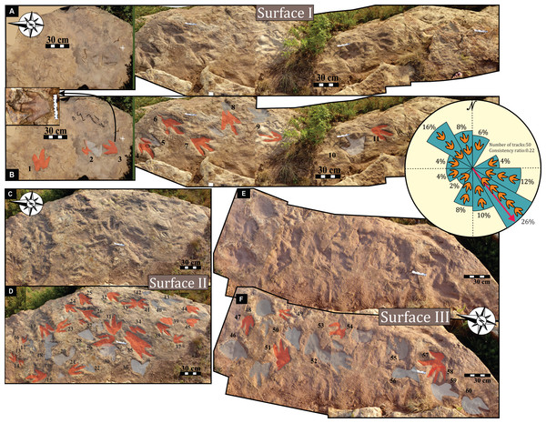 Field views of the Mafube dinosaur track site.