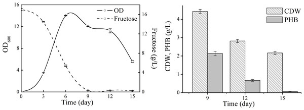 Cell growth, fructose consumption and PHB accumulation profile of N. antarctica cultivated in TYS medium.