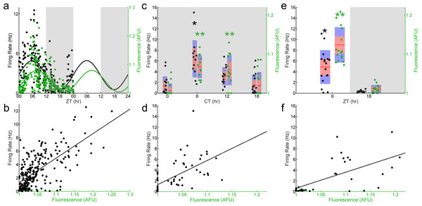 E-box driven gene expression and spontaneous firing rate are rhythmic and correlated in individual SCN neurons.