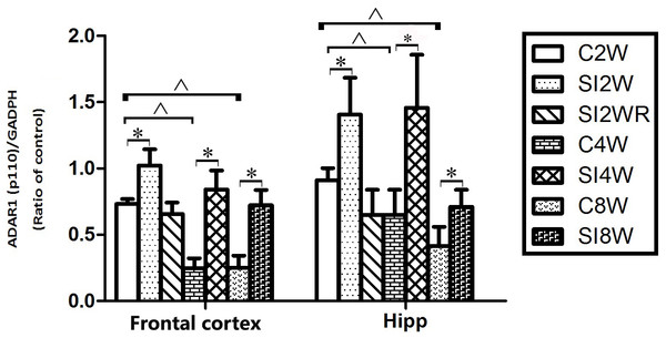 Increased ADAR1 (p110) protein expression in frontal cortex and hippocampus of isolated mice and its recovery by re-socialization in statistical analysis.