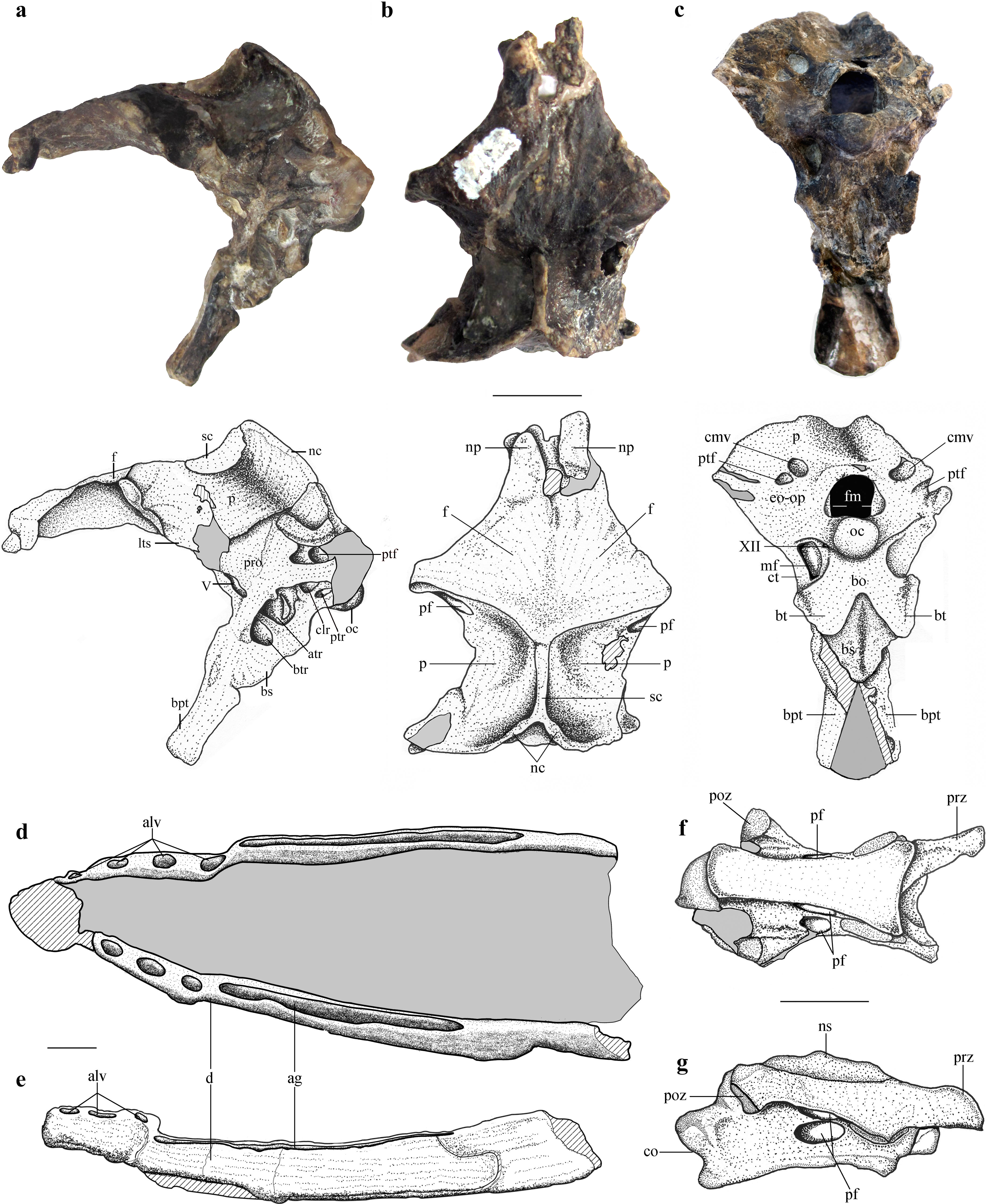 A Jurassic pterosaur from Patagonia and the origin of the ...