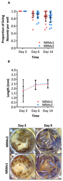 Comparison of Nasonia germ-free larval development on NRMv1 and NRMv2.