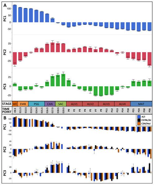 Global patterns of sample variation across lung development.