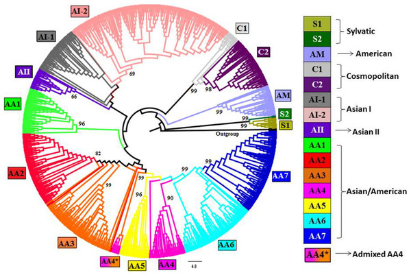 Phylogenetic tree of DENV-2 strains obtained using Neighbor-joining (NJ) method in MEGA.