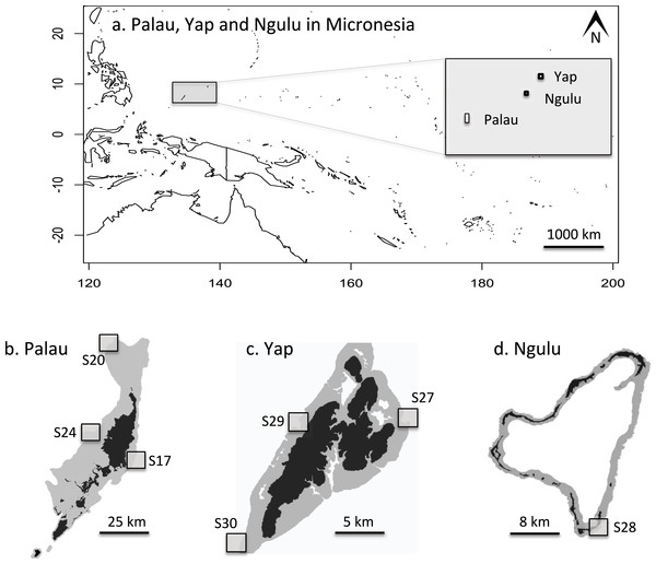 Maps of sampling locations: (A) overview of location of Yap, Ngulu and Palau in Micronesia; (B) sample sites in Palau; (C) sample sites in Yap; (D) sample sites in Ngulu.