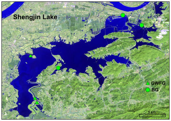 The location of our study area, Shengjin Lake National Nature Reserve and our sampling sites.