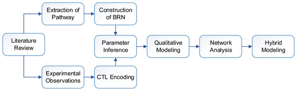 Flow diagram of the study showing sequence of methods.