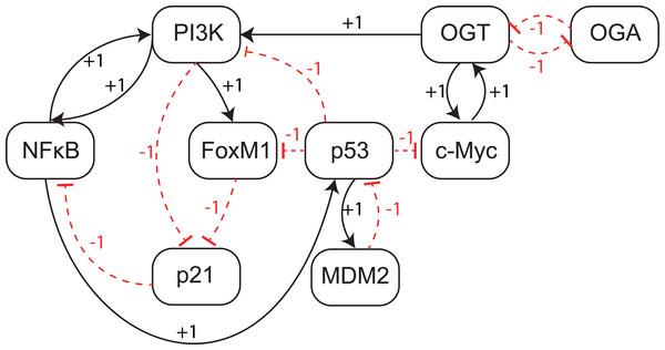 Qualitative Biological Regulatory Network (BRN).