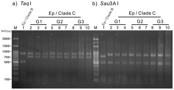 Restriction fragment length polymorphism (RFLP) analysis of three generations of the clade C Symbiodinium-infected anemones.