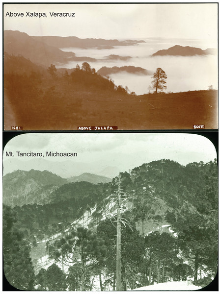Photos of landscapes of two of the hotspots identified in this study from the Nelson-Goldman expeditions across Mexico in the late nineteenth and early twentieth centuries: above Xalapa, Veracruz (SIA2014-03203), Mt. Tancítaro, Michoacán (SIA2016-03203).