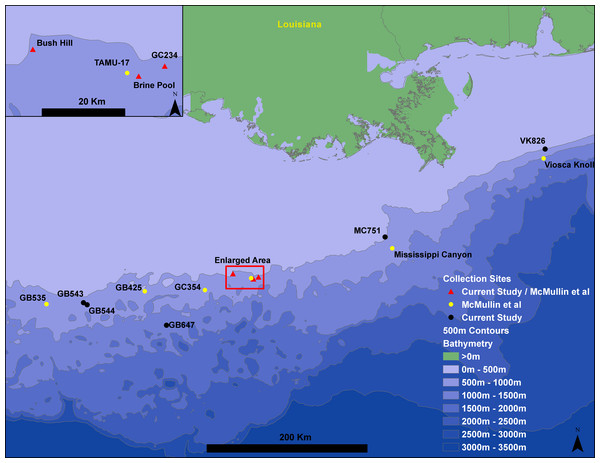 Gulf of Mexico seep locations from which Seepiophila jonesi individuals were collected.