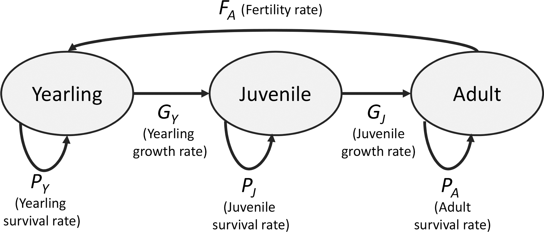 effects of yearling  juvenile and adult survival on reef