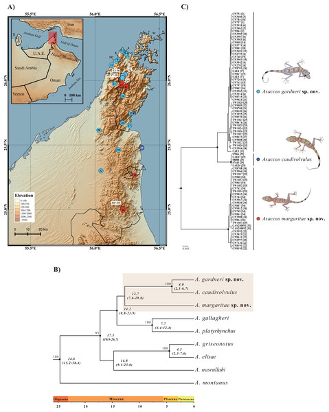Geographical distribution and phylogenetic relationships.