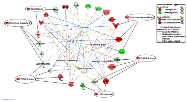 "A graphical representation of the molecular relationships between the expression of genes that were significantly affected by the BLE treatment associated to the top canonical pathways as well as genes related to colorectal cancer that found in ""Cancer, Cell Death and Survival, Cellular Movement"" network of BLE vs control treatment."