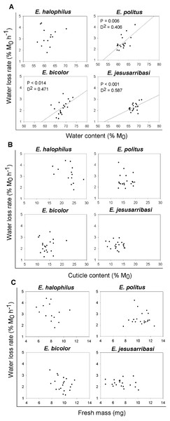 Relationships between individual water loss rates (WLR) and initial water content (WC0), cuticle content (CC) and fresh mass (M0) for Enochrus species.
