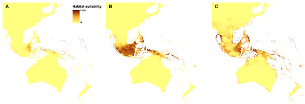 Distribution of the suitable climatic niches of Neuwiedia species during LGM: N. borneensis (A),  N. veratrifolia (B), and  N. zollingeri (C).