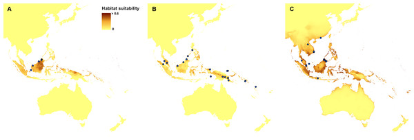 Current distribution of the suitable climatic niches of Neuwiedia species: N. borneensis (A),  N. veratrifolia (B), and N. zollingeri (C).