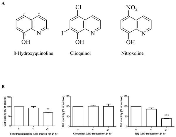 8-Hydroxyquinoline, clioquinol and nitroxoline.