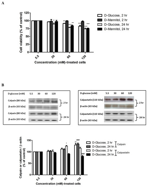 High glucose-induced alteration of cell viability, capain and capastatin proteins expression.