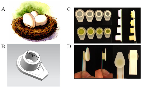 The 3D printed nest-like devices (B) with different height (h) and diameter (2r = 6, 7, 8 and 9 millimeter) (C) and the photo of the incubation (D).