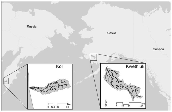 Locations of the two study rivers, the Kol River on the Kamchatka peninsula, Russian Federation, and the Kwethluk River, a tributary of the Kuskokwim in western Alaska.