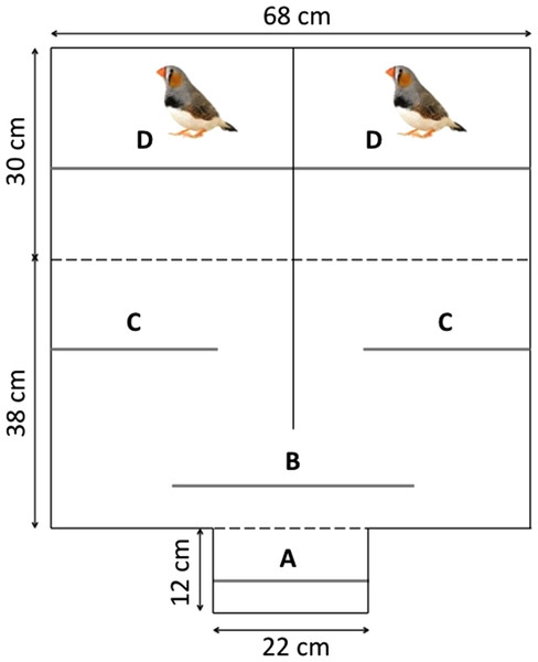 Top view of the mate-choice apparatus with: the observation compartment (A), the male compartment (D) and the choice compartment divided into the neutral zone (B) and the choice zone (C).