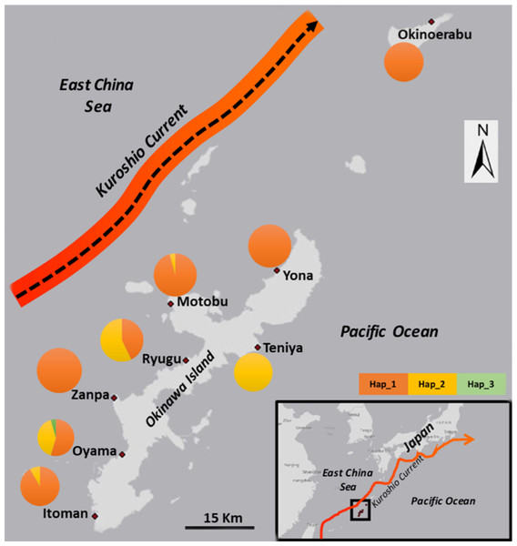 Map with sampling locations and frequency of 16S ribosomal DNA (16S) haplotypes of Stichopus chloronotus from Okinawa and Okinoerabu Islands, Japan.