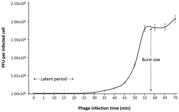 One-step growth curve of phage phiC119 on E. coli at 37 °C.